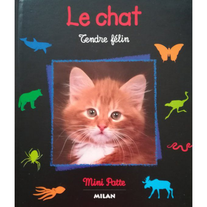 Le chat, tendre félin